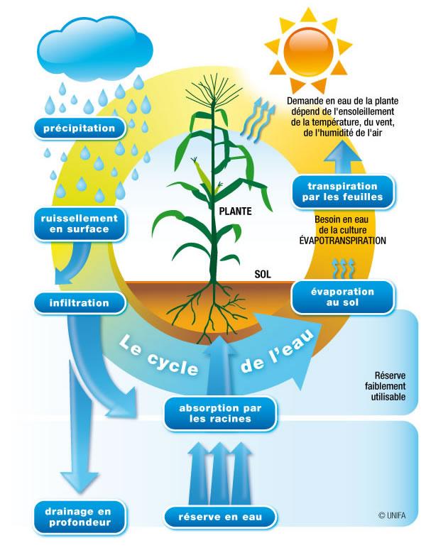 activité biologique du sol